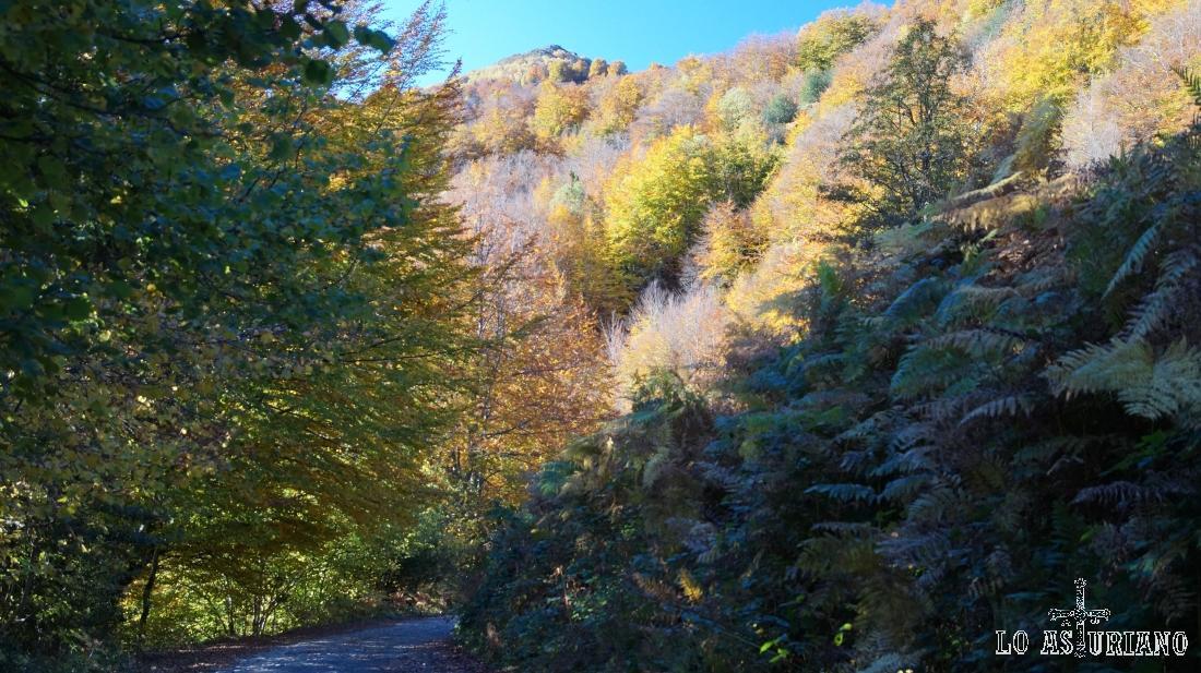 Paseando por el fantástico bosque de Peloño, que más adelante veremos en perspectiva desde lo alto.