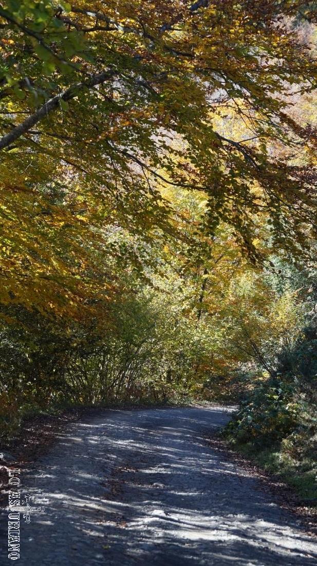 El sombrecino camino de Peloño.