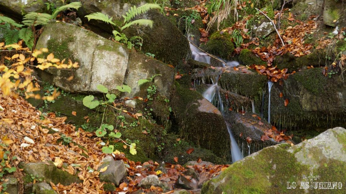 Reguerito en el bosque de Peloño.