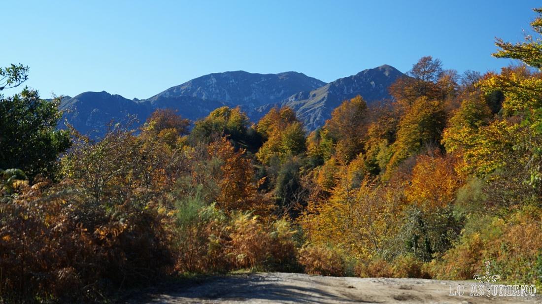 El hayedo de Peloño, en Ponga, en un precioso día de noviembre.
