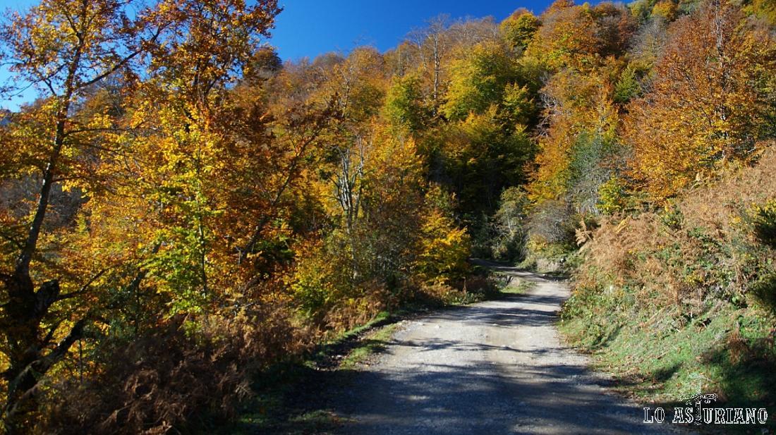 El bosque de Peloño en noviembre.