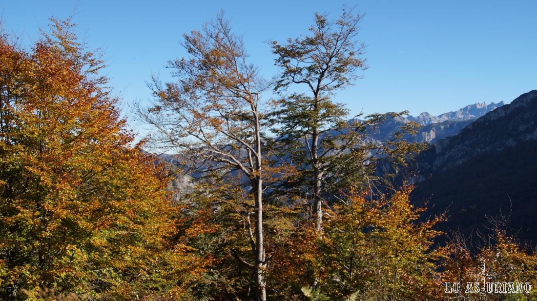 Colores pardos en el otoño astur.