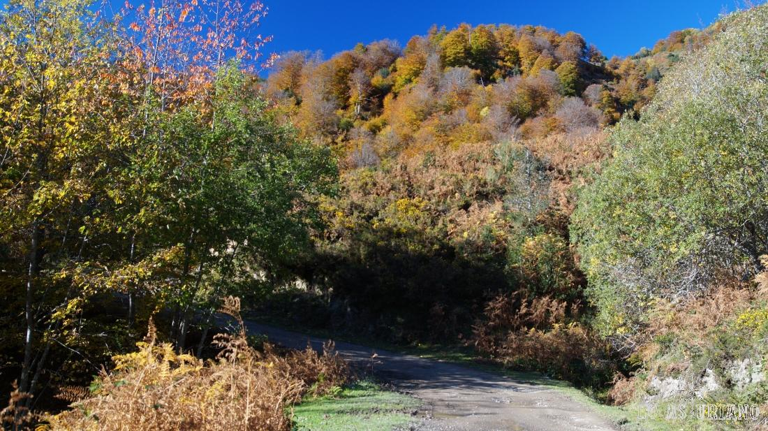 Paseo por el camino del bosque de Peloño, en Ponga.
