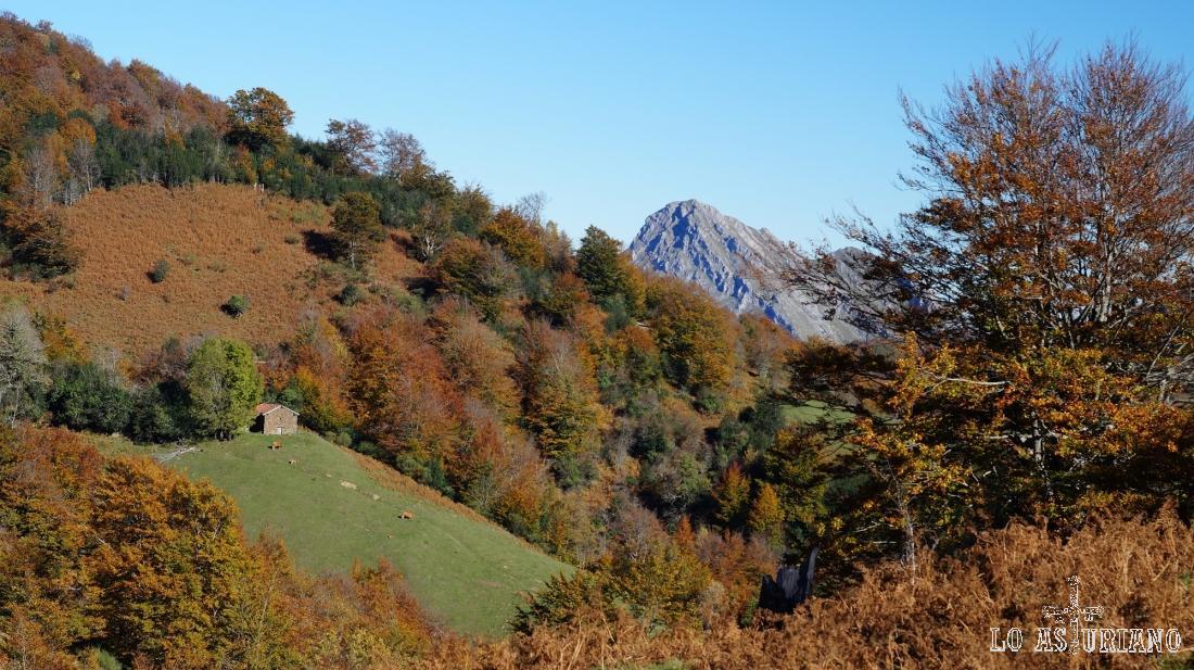 Colores rojizos del otoño asturiano.