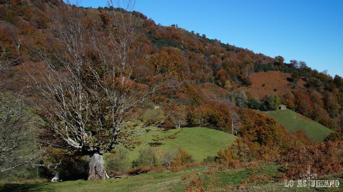 Parque Natural de Ponga, Asturias.