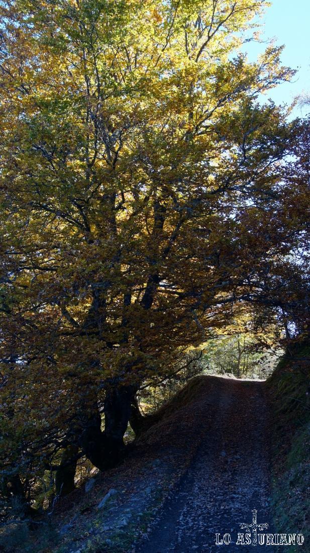 Por este camino, vamos desde la collada Granceno, hacia la collada Viances.