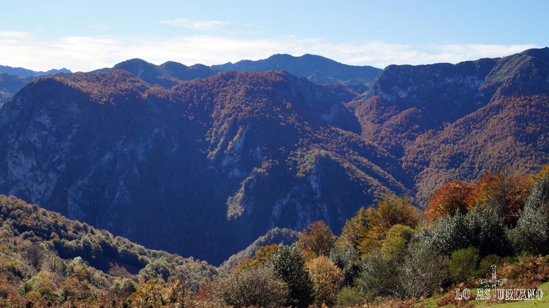El bosque de Peloño, desde la collada Viances.