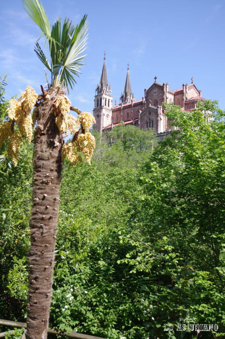 Palmera y Basílica de Covadonga, a 257 metros sobre el nivel del mar.