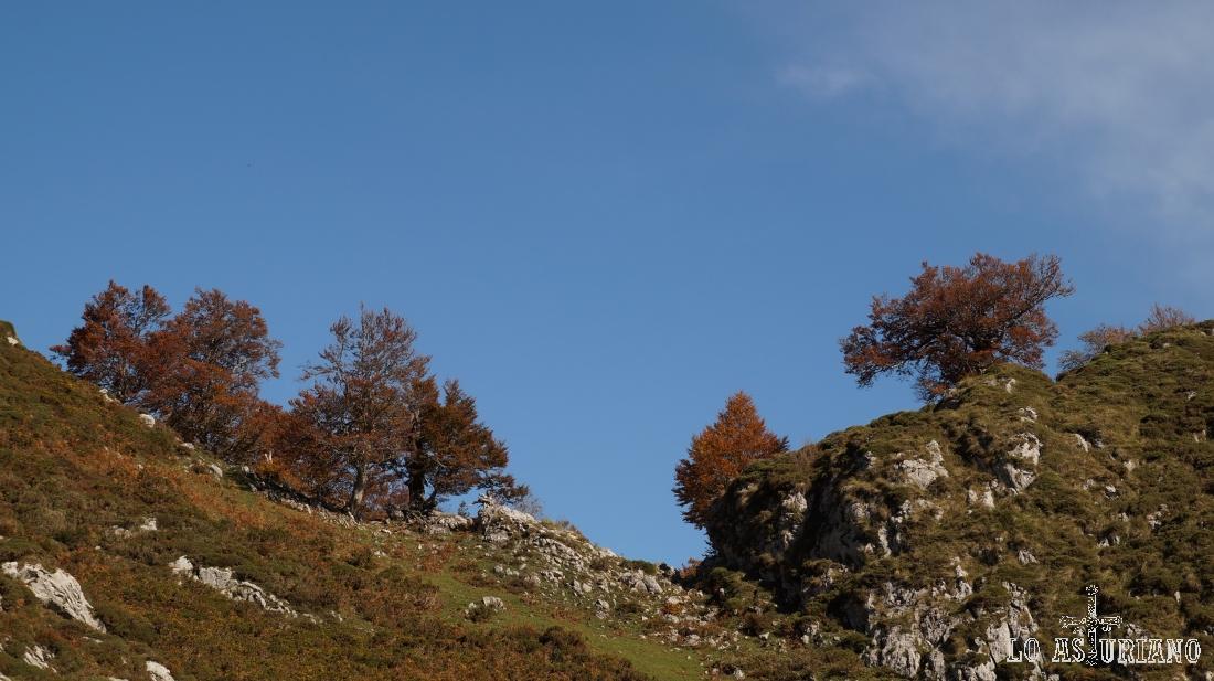 Collada, a 1425 msnm.