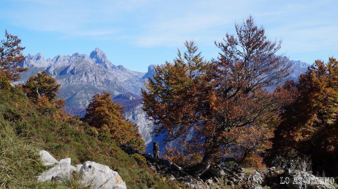 Tenemos ya unas vistas incomparables de los Picos de Europa.