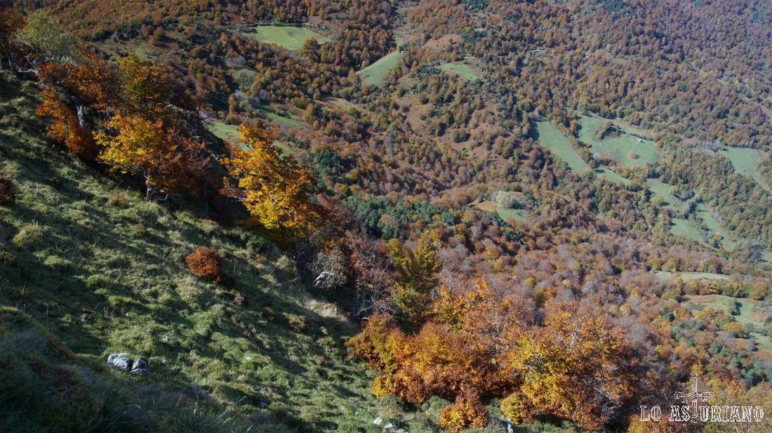 Colores pardos y rojizos del otoño asturiano.
