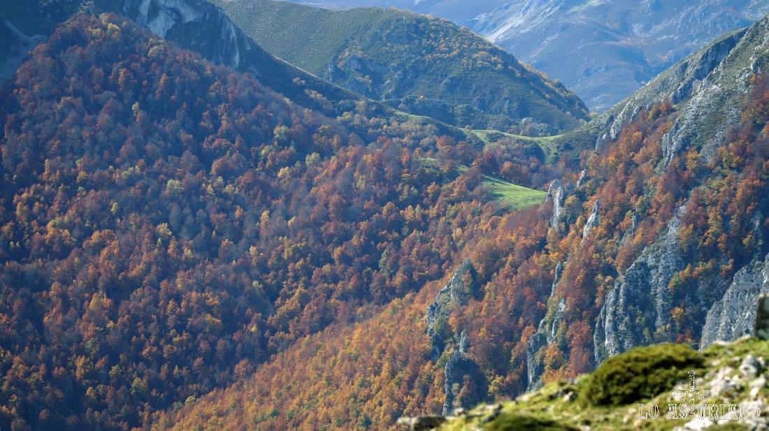 Zoom hacia al bosque, donde se aprecian ya algunos árboles negros: pasados de color, dominados ya por el frío.