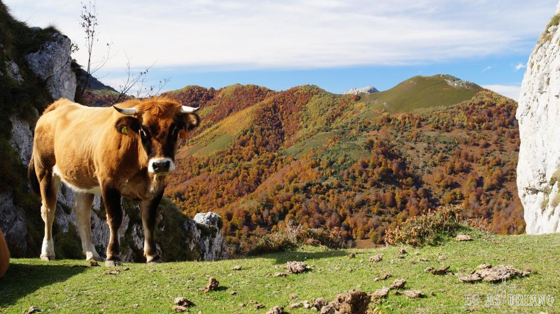 Vaquita, el Rasu y el bosque de Peloño al fondo, en pleno mes de noviembre.