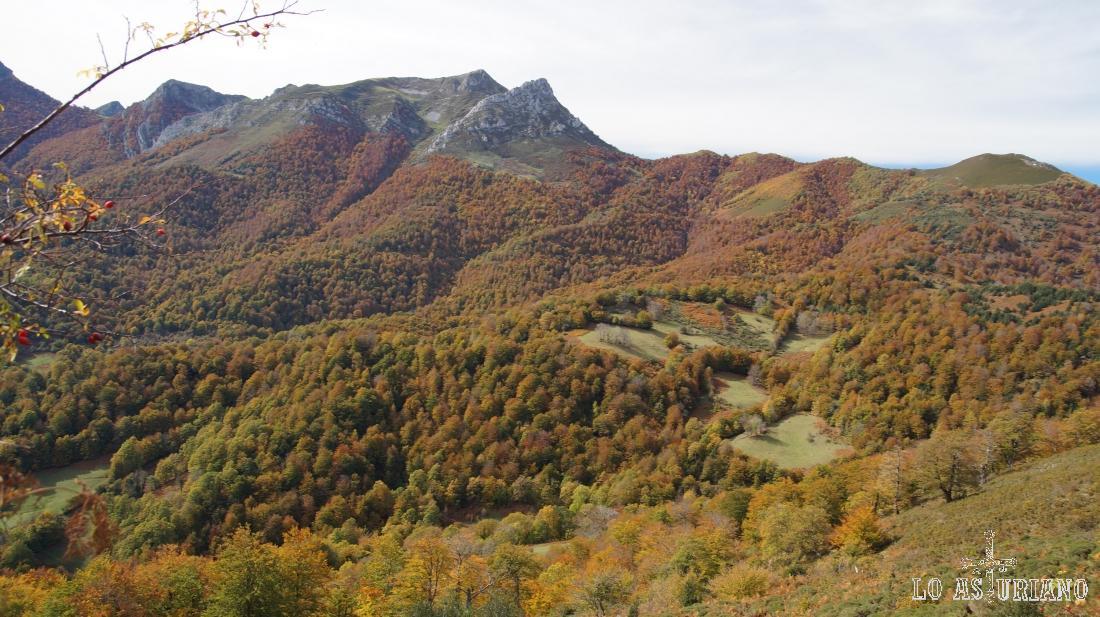Estupendos colores otoñales del bosque de Peloño, Según como sea el año de frío o no, puedes encontrarlos desde la segunda semana de octubre hasta mediados de noviembre. Año más frío, más pronto se enrojiza el bosque.