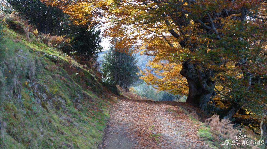 Camino que va desde la collada Granceno hasta el pie del Sen de los Mulos, la collada Viances.