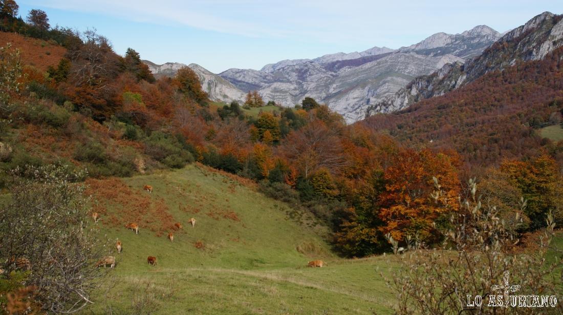 Al fondo, los picos de Europa, ya cerca de la collada Granceno.