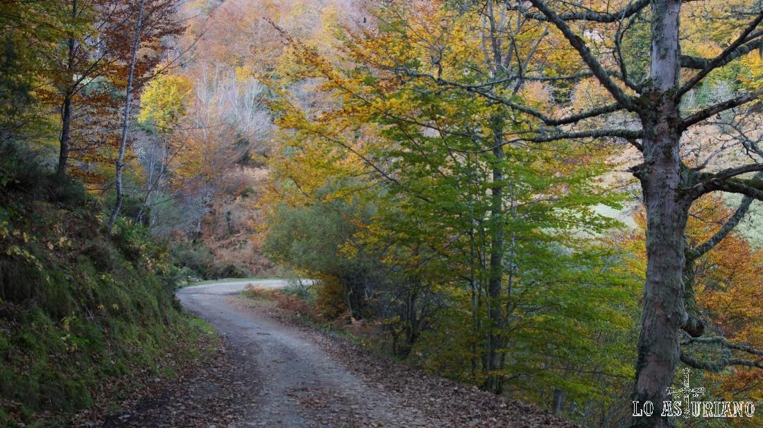 El hayedo de Peloño, dentro de la mayor masa forestal de Asturias.