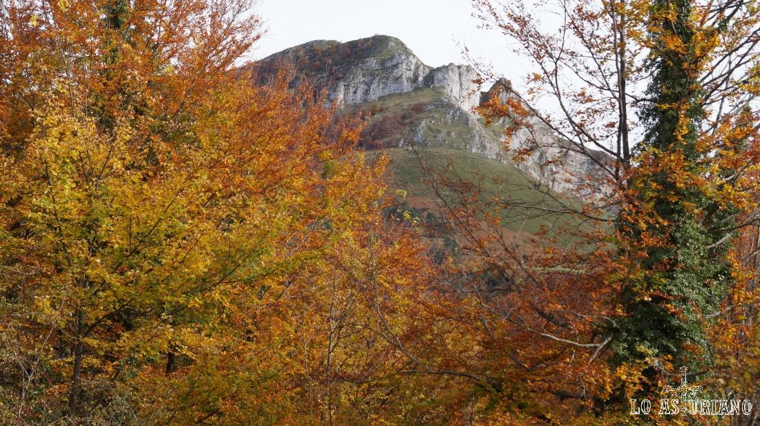 El Sen de los Mulos, entre la arboleda del bosque de Peloño.