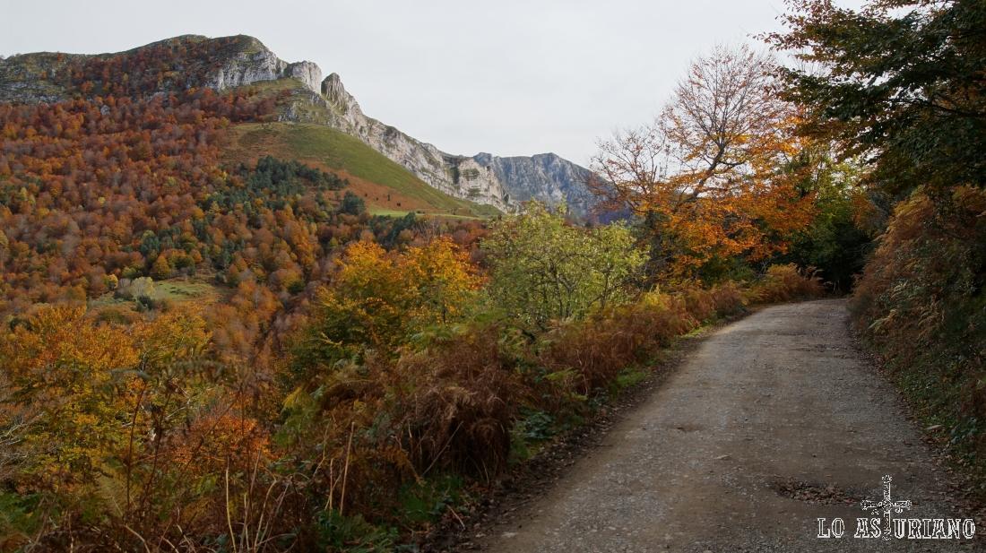 La pista del bosque de Peloño, con el Sen de los Mulos, a la izquierda.