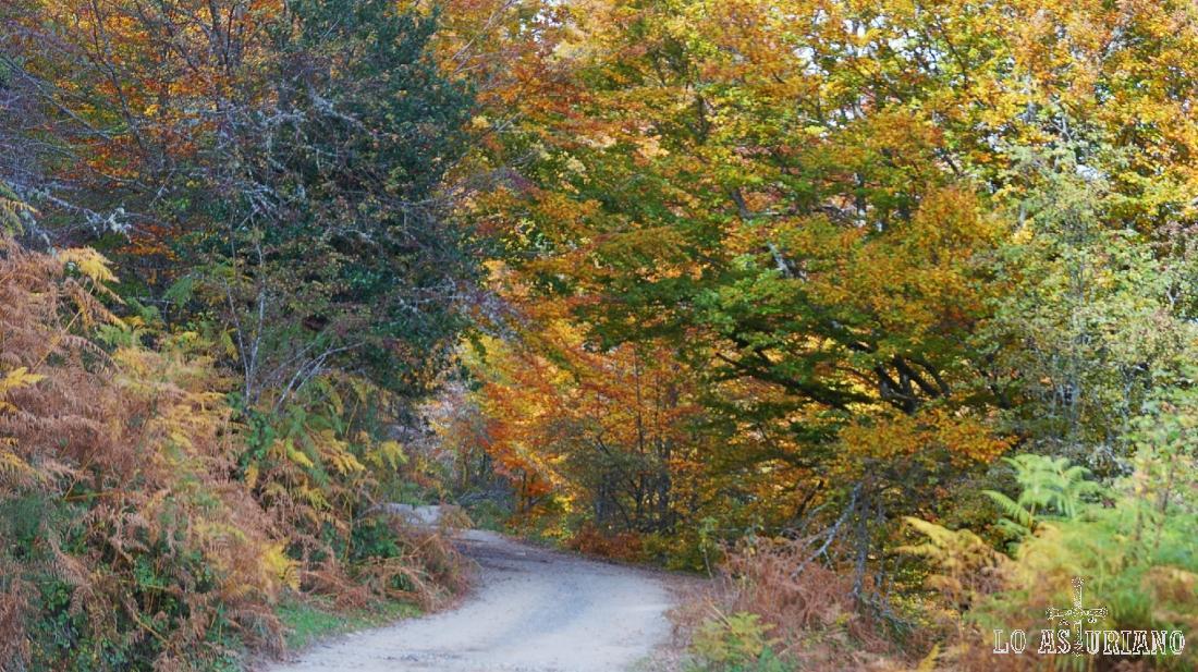 Bosque de Peloño en el mes de noviembre.