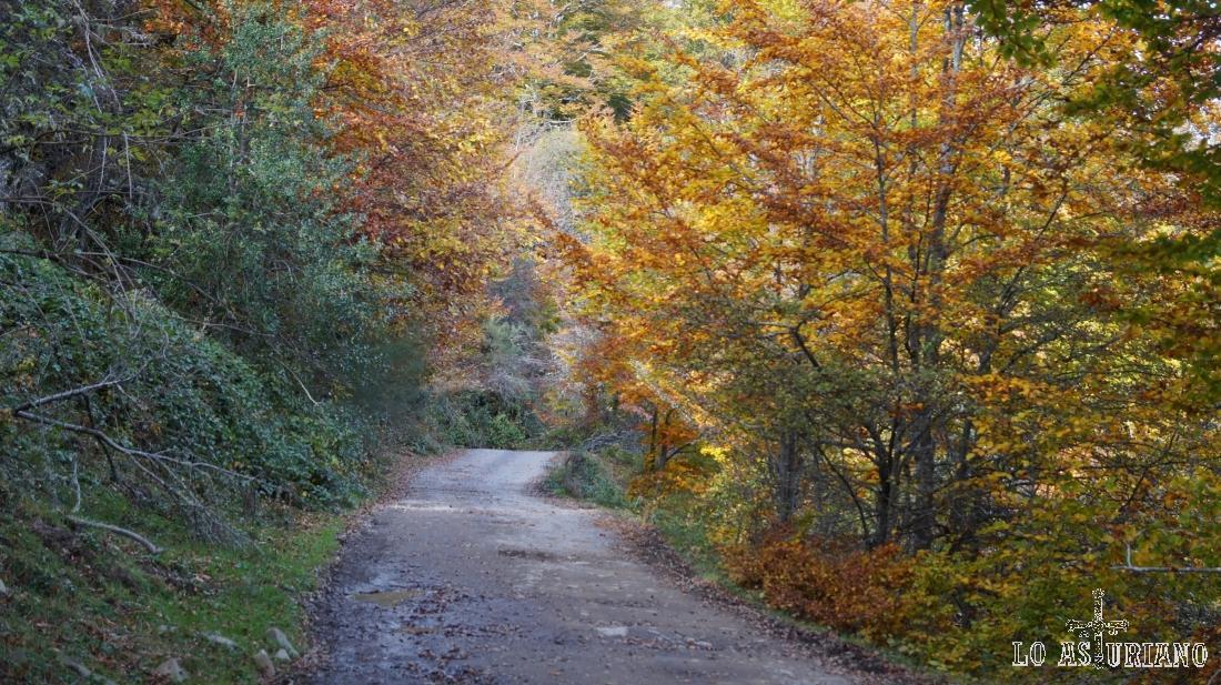 El bosque de Peloño es un auténtico espectáculo en el mes de otoño.