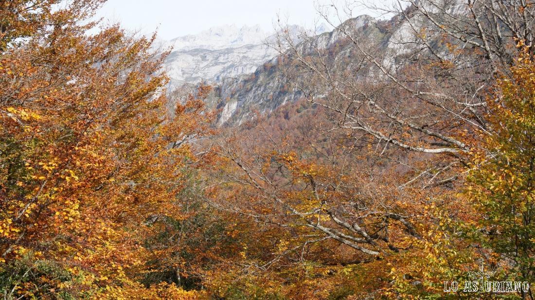 Este tono rojizo se disfruta durante pocos días, coincidiendo con el punto álgido del otoño pongueto.