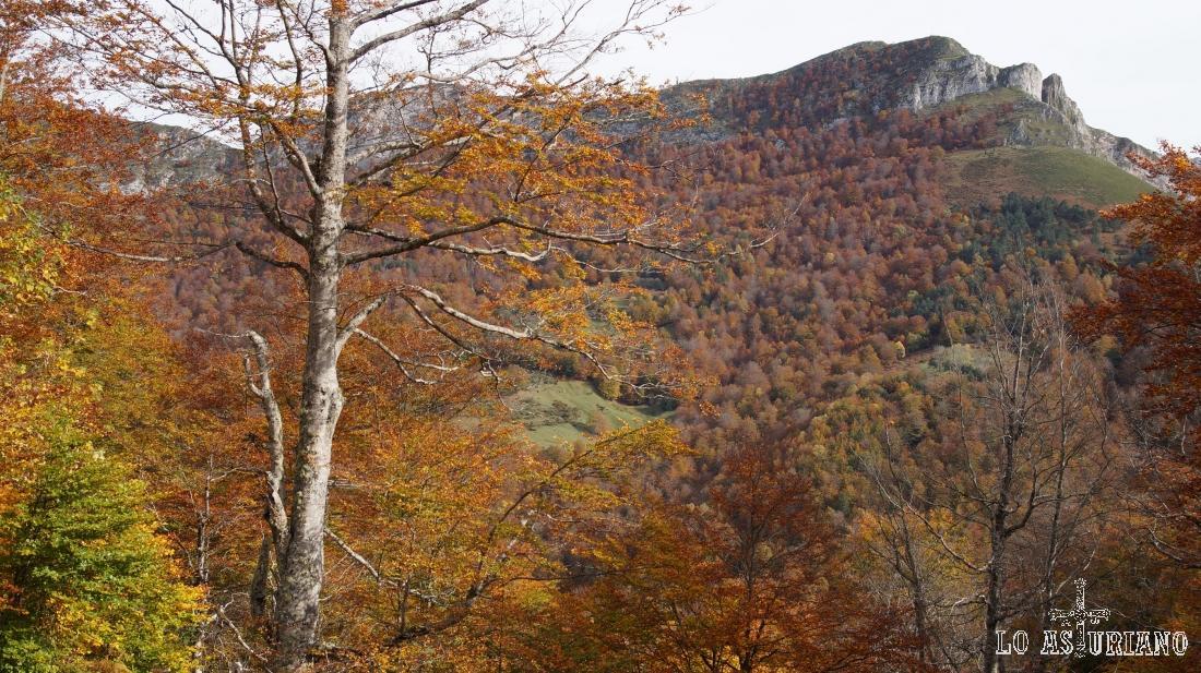 El Sen de los Mulos, cima ideal para subir en otoño, donde nos acompañará en todo momento el colorido del bosque de Peloño.