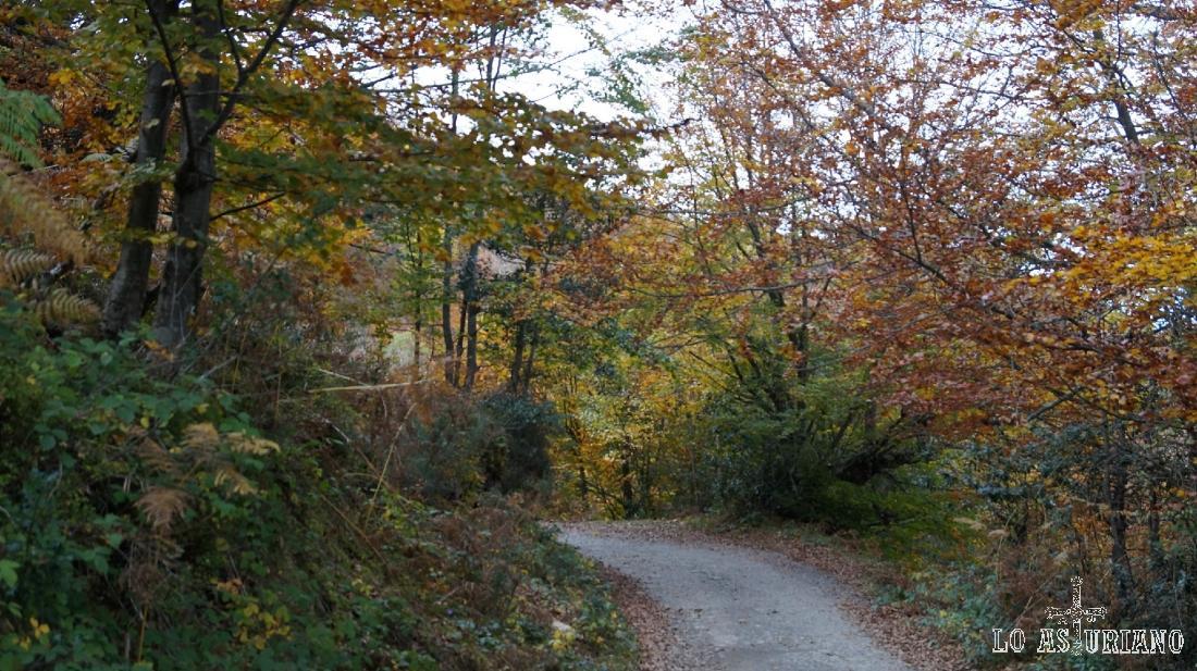El bosque de Peloño está integrado en la mayor masa boscosa de Asturias.