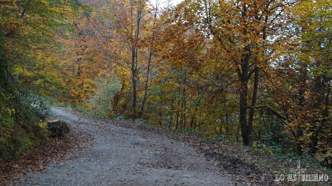 La cómoda y agradecida pista del bosque de Peloño.
