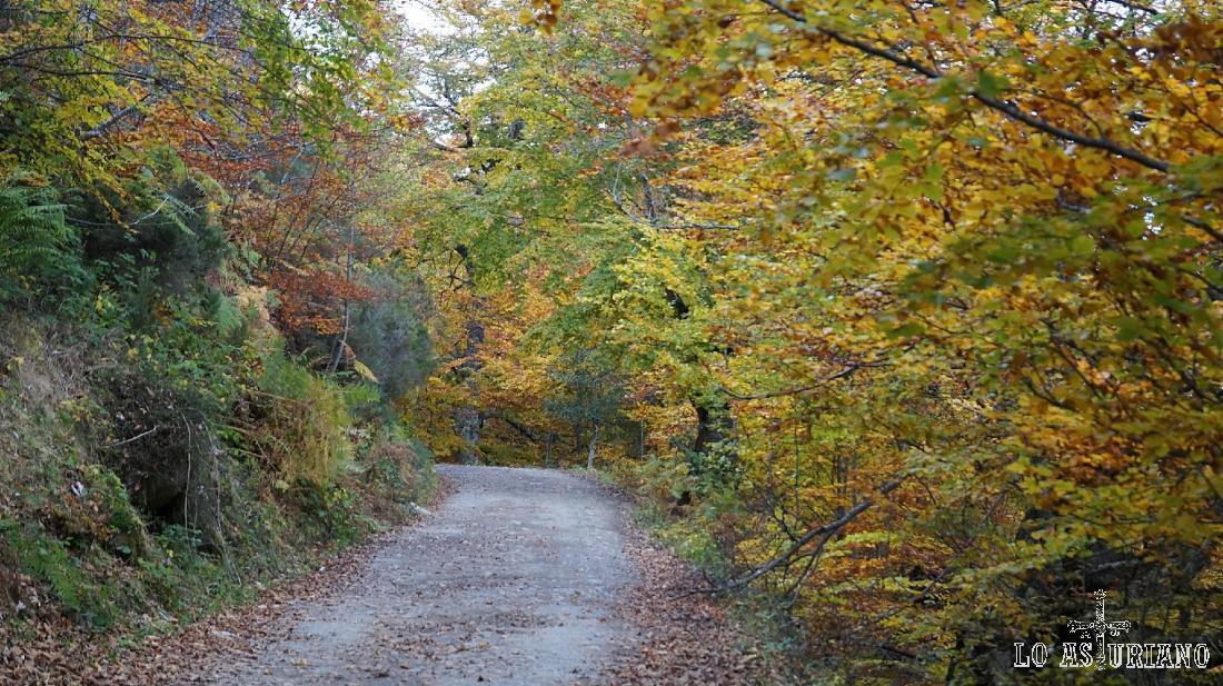 La carretera del Connio, dominada por el otoño.