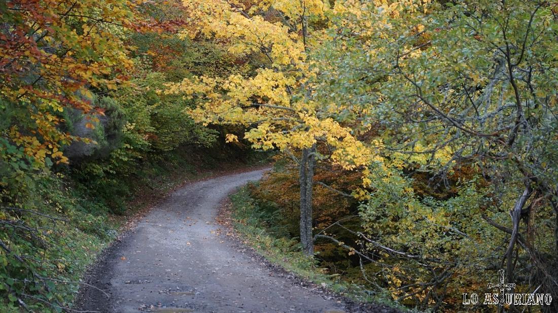 El otoñal bosque de Peloño, dominando la pista.