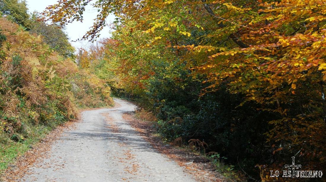 El precioso otoño asturiano en el hayedo de Peloño.