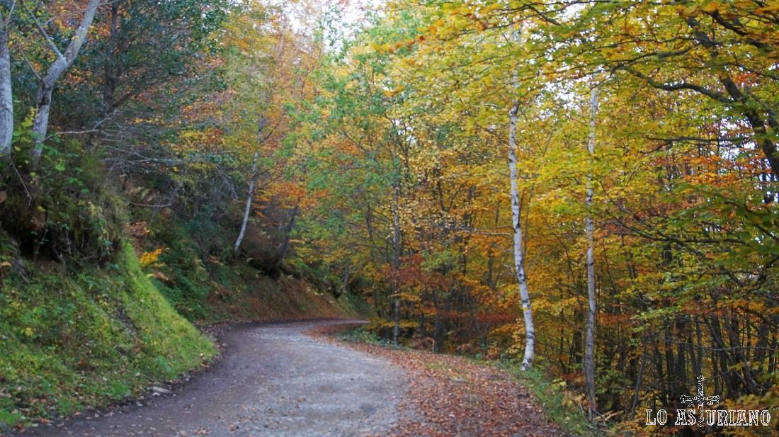 Bosque de Peloño, Ponga, Asturias, España.