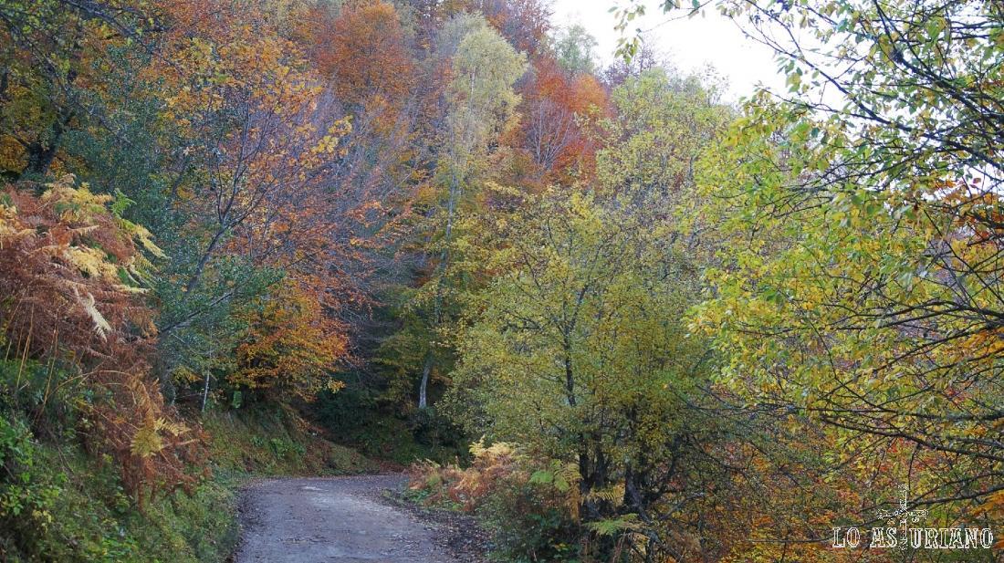 Colores otoñales en el bosque de Peloño, que está dentro de la mayor masa forestal de Asturias.