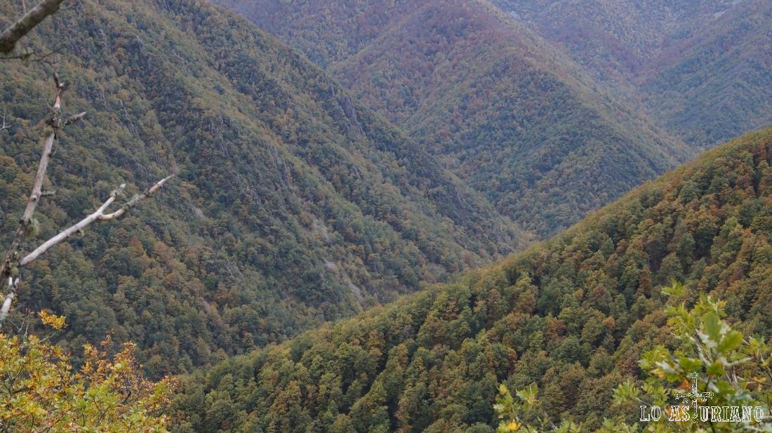 Nada menos que el frondosísimo bosque de Muniellos.