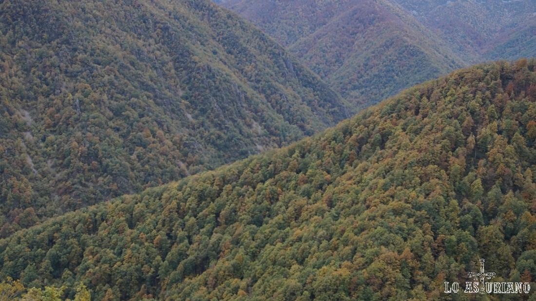 En Muniellos, sientes una potencia natural impresionante: la frondosidad del bosque, unida a esas historias de los lugareños sobre osos y lobos.