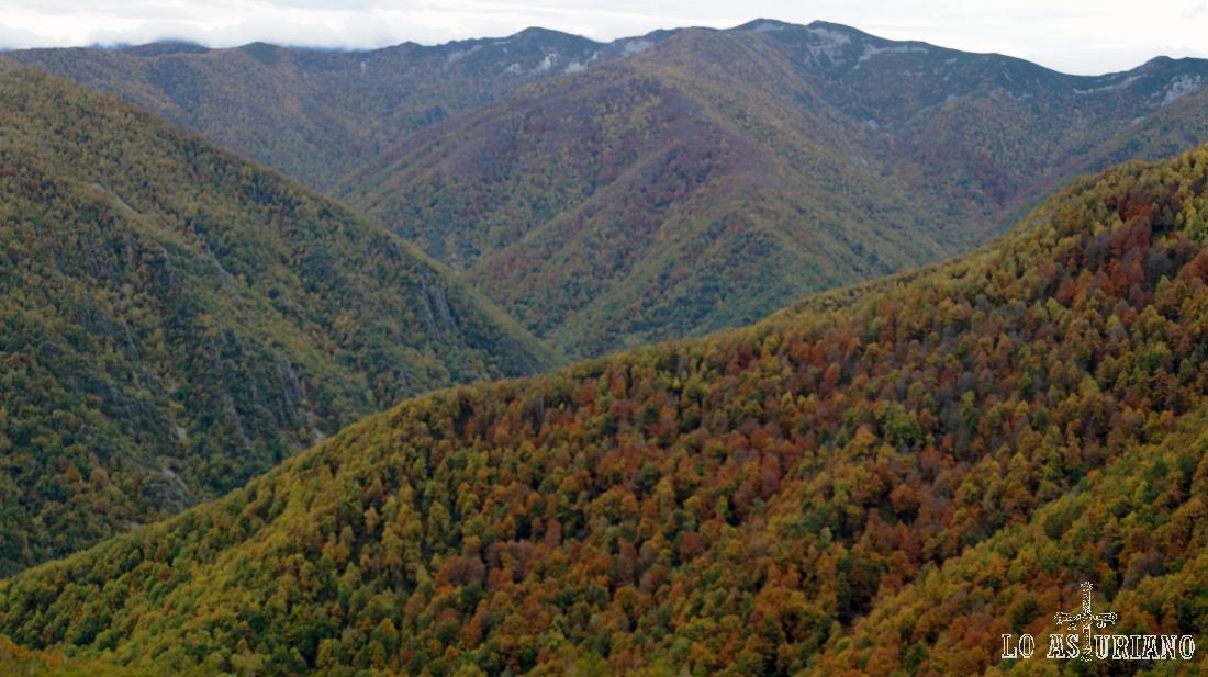 El bosque de Muniellos, desde la carretera del Connio, en el concejo de Cangas del Narcea, Asturias.