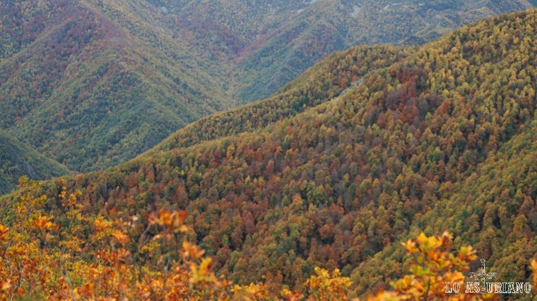 Preciosos paisajes de otoño en Muniellos, Cangas del Narcea, Asturias.