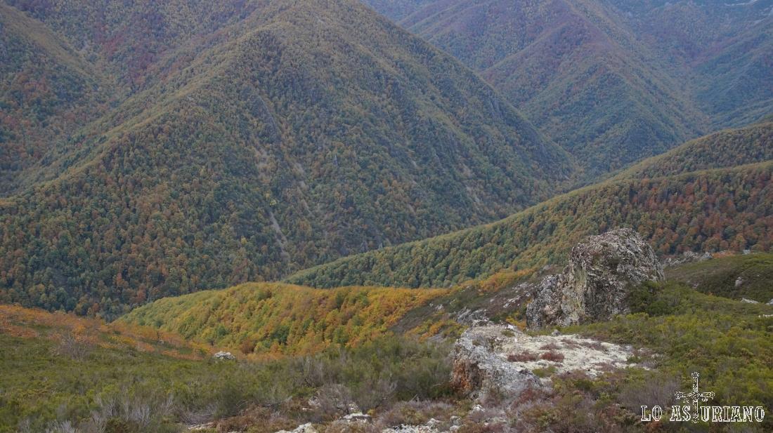 Subiendo al pico Valmayor, abajo, los bosques que conforman Muniellos.