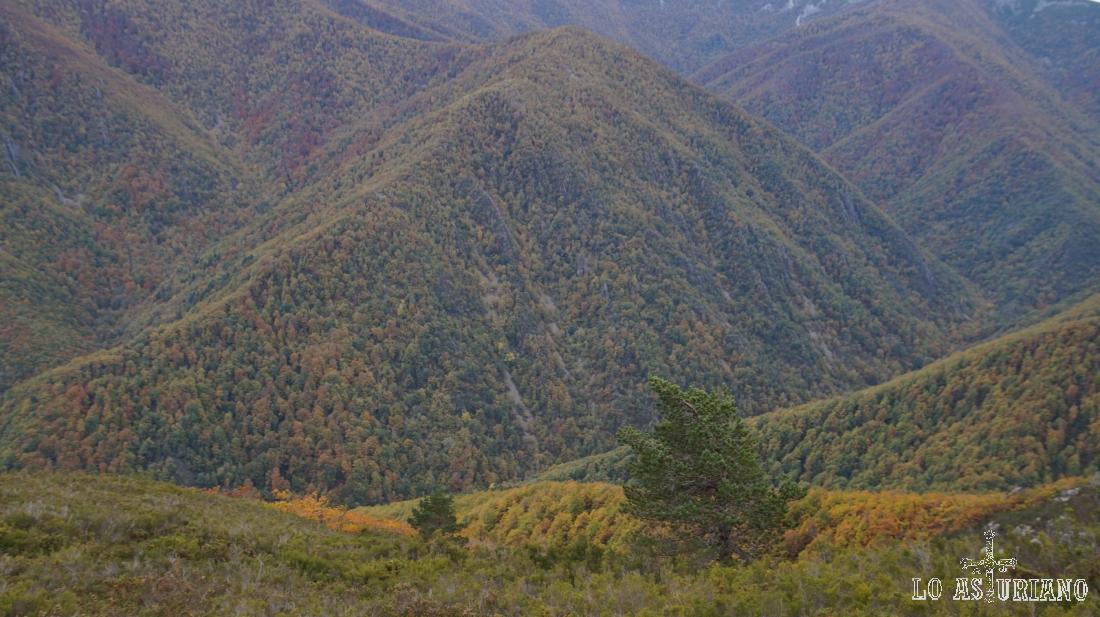 El precioso bosque de Muniellos en el otoño astur.