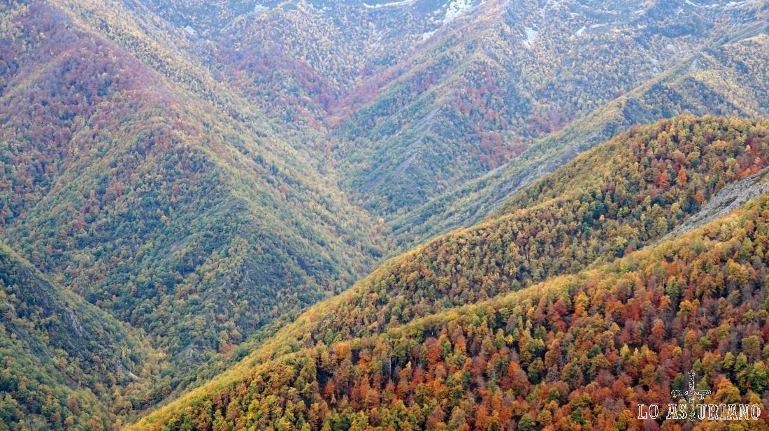 Colores del otoño en la Reserva Integral de Muniellos, Asturias.