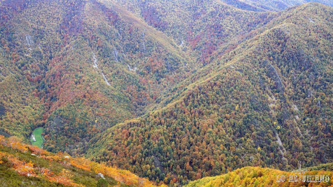 Colores de otoño en el valle del río Tablizas o Muniellos, uno de los lugares más protegidos de Asturias.