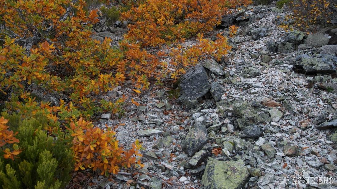 Canchal y hojas de otoño.