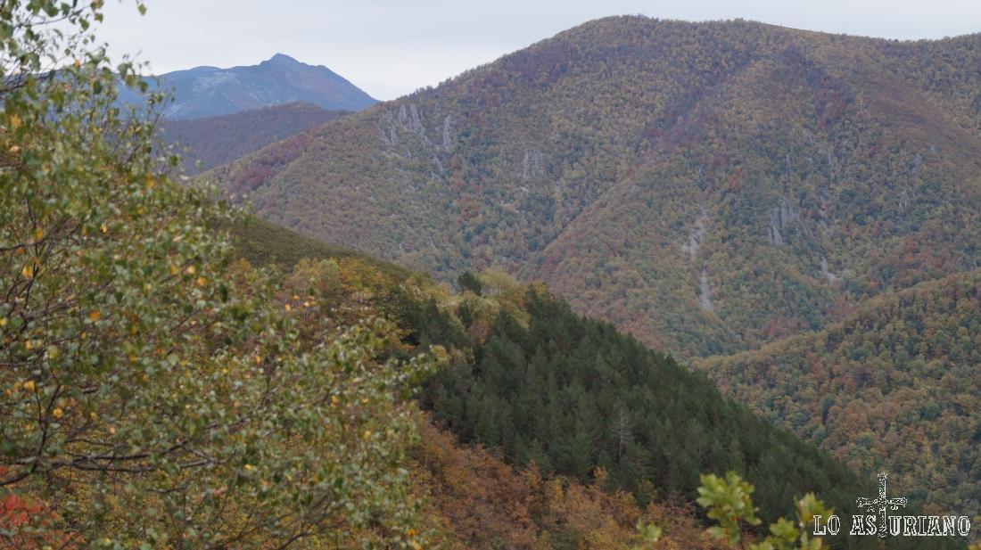 Los bosques de Muniellos, desde la carretera del Connio, concejo de Cangas del Narcea, Asturias.