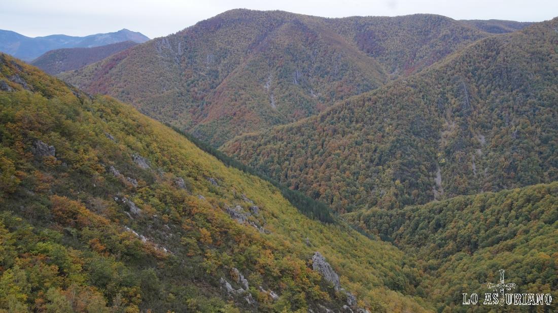 En el centro, la manchita verde oscuro de pinos albares, entre el inmenso robledal de Muniellos.