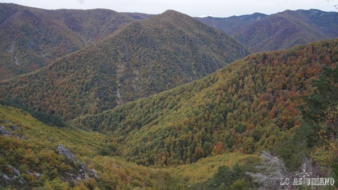 Reserva Natural Integral de Muniellos.