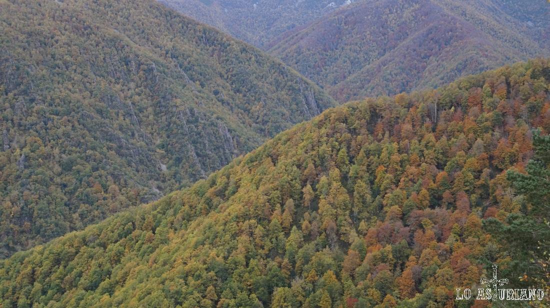 Paisajes de otoño en Muniellos, Asturias.