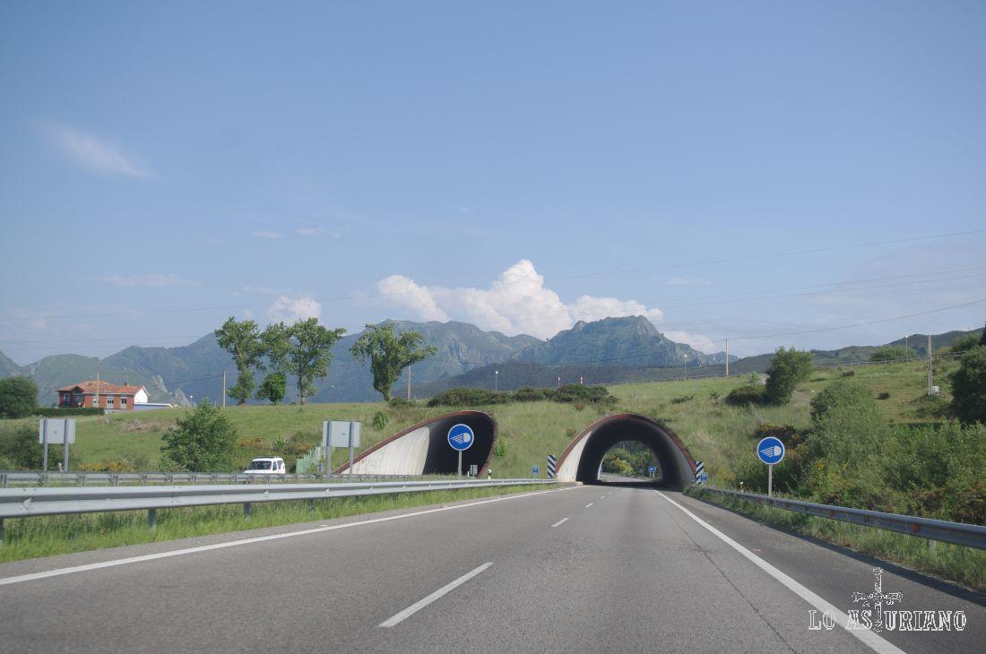 Por la A8, con las vistas de la Sierra del Sueve al fondo.