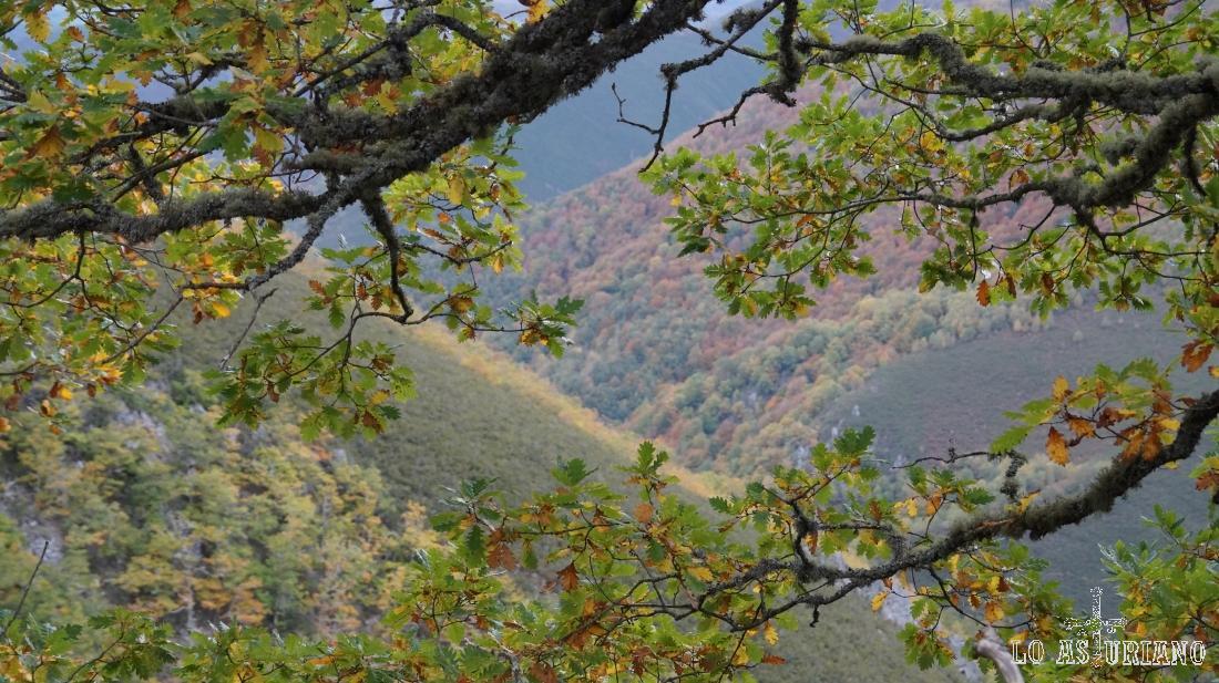 El valle del río Muniellos o Tablizas.
