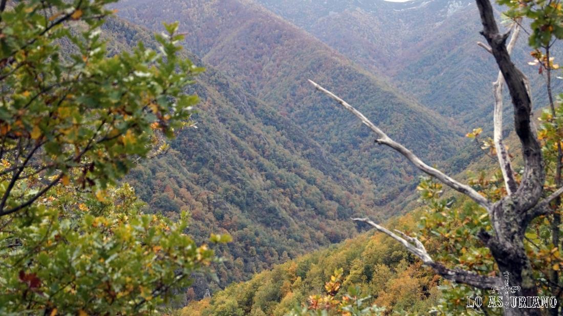 El robledal de Muniellos es el mejor conservado de Europa.